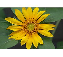 Flower in the Sun Photographic Print