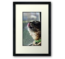 It Alright Little Birdy....I Just Want To Taste....I Mean Kiss You!! Framed Print