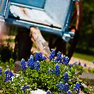 Bluebonnets and cart by guppyman