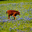 Tiptoe through the Bluebonnets by guppyman