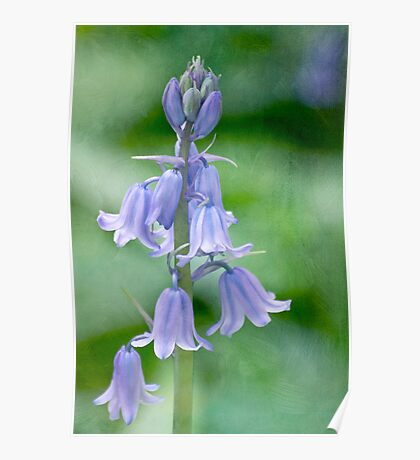 Bluebells in a painterly style Poster