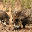 Boar Family by Emma Holmes