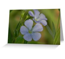 Markings of the Blue Flax Flower Greeting Card