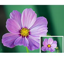 Collage of A Cosmos Photographic Print