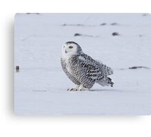Chilly Canvas Print