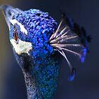 King Pea Blue by Emma Holmes