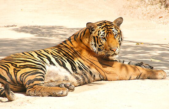 At Rest in the Shade by Carole-Anne