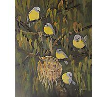 Yellow robins 019 Photographic Print