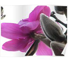 Oriental flower Poster