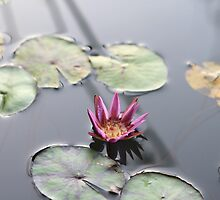 Water Lily at Nyungwe Forest Lodge by Ben Fatma Marc