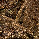 Stone... by Gary  Davey (Jordy)