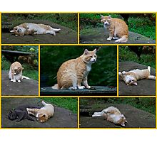 Marvelous Max The Marmalade Cat #2 Photographic Print