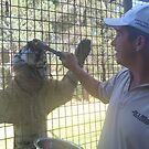 Big Cat Encounter - Sumatran Tiger - Taronga Western Plains Zoo by Joe Hupp