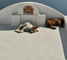 Sleeping dogs in Santorini by brianhardy247