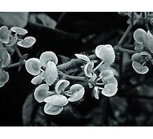 Black and White Tentacles Photographic Print
