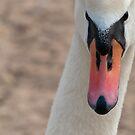 Swan by Vac1