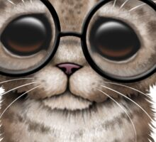 Cute Brown Tabby Kitten Wearing Eye Glasses, pink Sticker