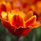 Just Flowers by Karen Havenaar