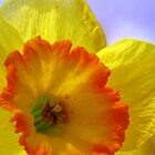 The Joyful Jonquil by AngieDavies