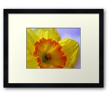 The Joyful Jonquil Framed Print