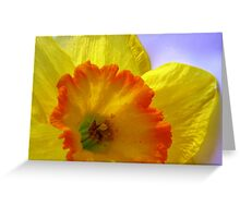 The Joyful Jonquil Greeting Card