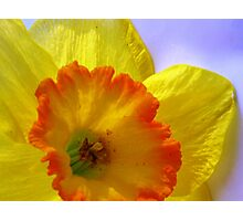 The Joyful Jonquil Photographic Print