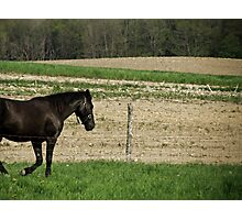 At a Gallop Photographic Print