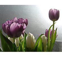 Spring Tulips Photographic Print