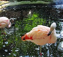Pink Flamingos by Nevermind the Camera Photography