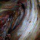 """Cedar""""s Heart by nadinecreates"""