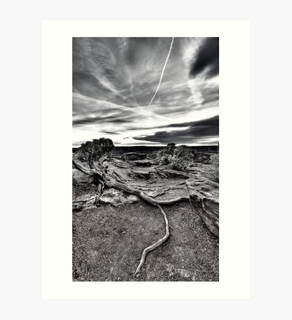 Sunset Root at Dead Horse Point Art Print