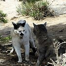 Cat Fight by Loree McComb