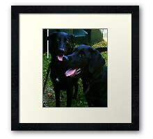 Double Trouble ! Framed Print
