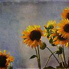 Lovin the Sun by Chris Ferrell