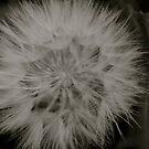 Floral Fluff by Joy Fitzhorn