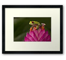 The young adventurer V2 Framed Print