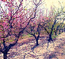 Peach Orchard by Jay Reed