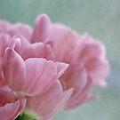 Joy of spring V by Maria Ismanah Schulze-Vorberg