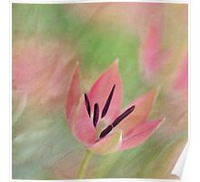 Joy of spring VI Poster