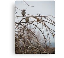 Life partners birds Canvas Print