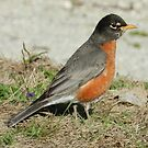"Mrs ""Robin""son by Heather Crough"
