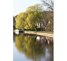 Willow tree reflection Photographic Print