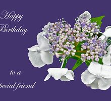 Special Friend Birthday Card - Blue Lace Cap Hydrangea by MotherNature