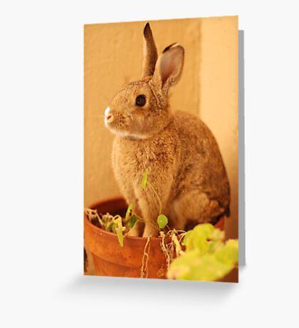 potted bun Greeting Card