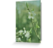 Dreamy Blackthorn Greeting Card