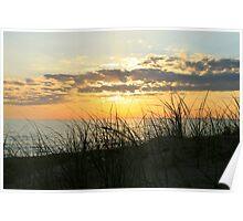 Dune Grass at Sunset Poster