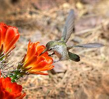 Hummingbird and the Hedgehog by Saija  Lehtonen