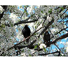 Spring Blossoms and birdies Photographic Print