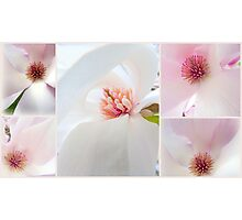 Pretty in Pink... Photographic Print