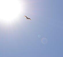 Hawk in Flight by TheaShutterbug